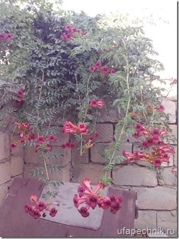 Баку в цветах 2